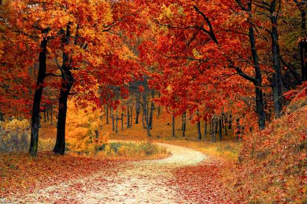 nature red forest leaves