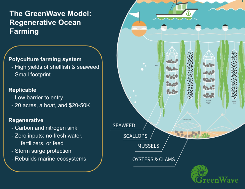 """A diagram showing a boat on the surface of the ocean over seaweed on a line and oyster, mussel, scallop, and clam cages.  The image describes the advantages of this """"polyculture farming system:"""" -High yields of shellfish and seaweed -Small footprint -Low barrier to entry -20 acres, a boat, and $20-50k -Carbon and nitrogen sink -Zero inputs: no fresh water, fertilizers, or feed -Storm surge protection -Rebuilds marine ecosystems"""